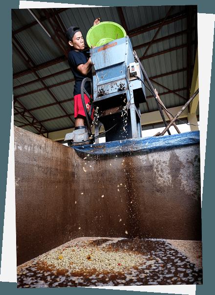 saffron-coffee-wet-process-middle-io
