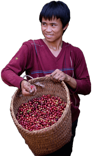 saffron-coffee-lao-farmer-io-2.png